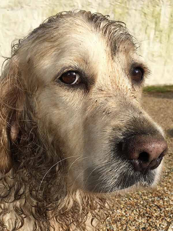 A picture of a muddy dog