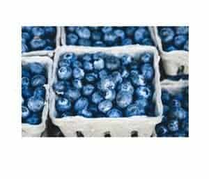 Punnets of blueberries